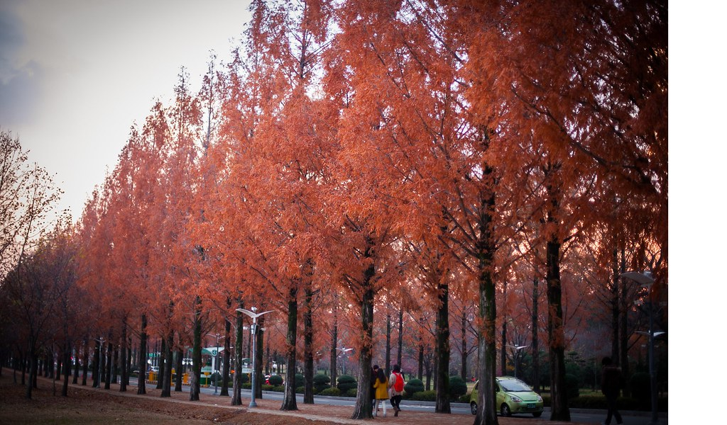 Fall Seoul State of Mind 007