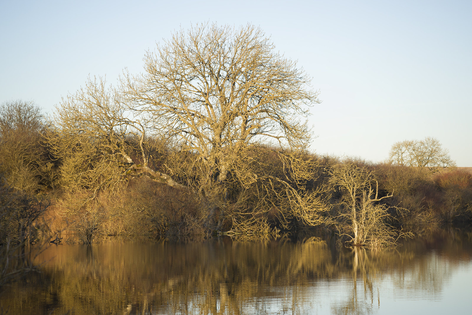 Trees Dipping their toes in the New Lake at Candown Copse