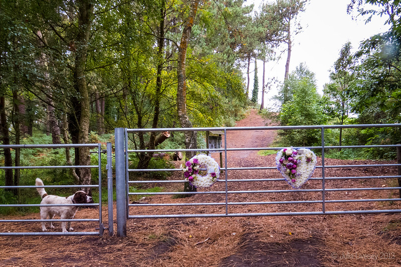 Wreaths attached to the gate onto Upton Heath