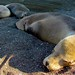 20140102wilderness medicine galapagos_0082