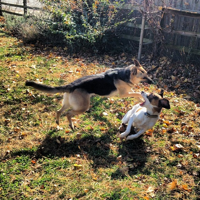 Flying dog wars. #puppypals