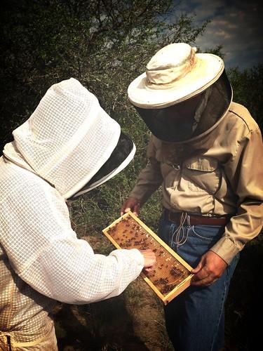 July 2 visit to Bigfoot bee yard