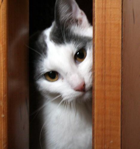 124/365 - Spot in a Closet
