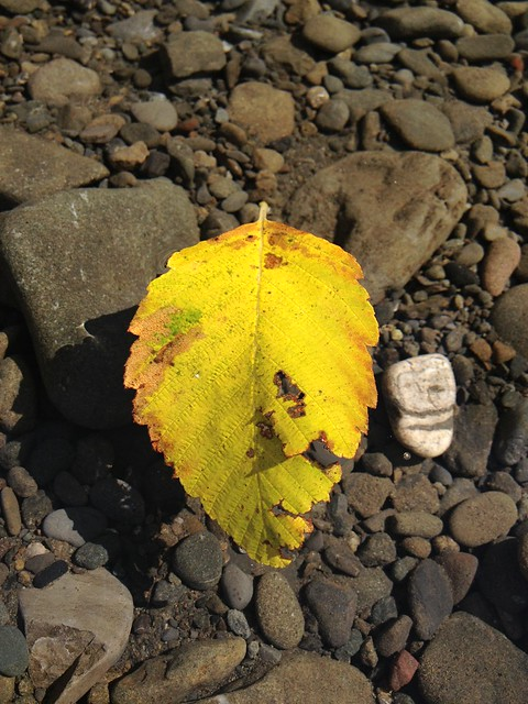 Leaf and stone