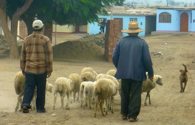 Pastores - Schafhirten