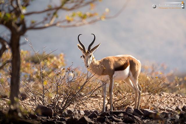 Namibia (2016)