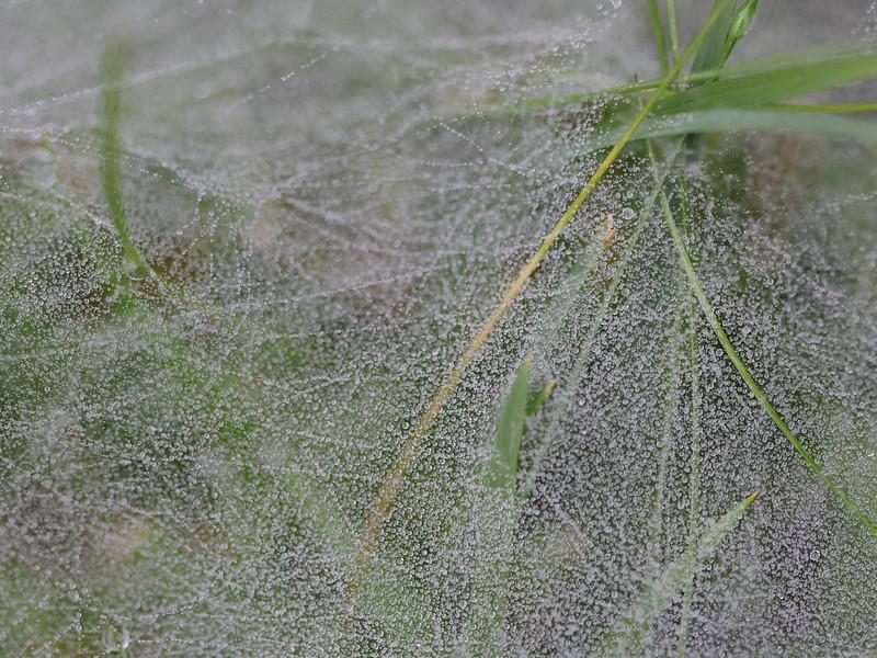 Dew veil