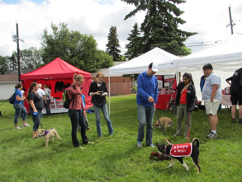 Avenue Goes to the Dogs 2013