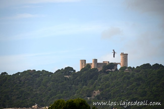 Castillo de Bellver desde el Museo del Baluard