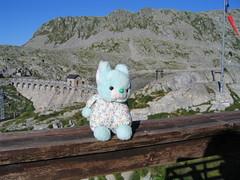 Choppy guardiano della diga