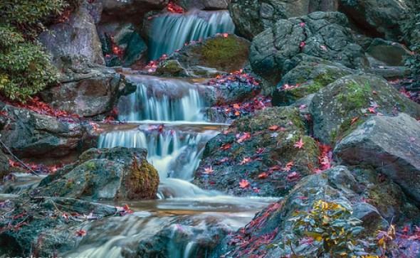 Autumn Colors #2 - Nikon 1 V2