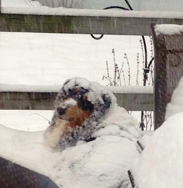 Silly dog! Doesn't know when to come in from the snow!