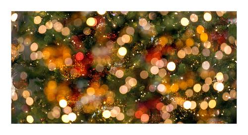 bright Christmas tree | leuchtender Weihnachtsbaum