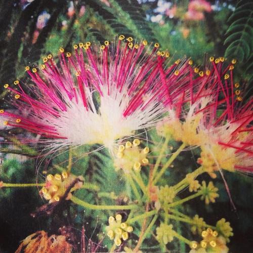 photo stitching: flower