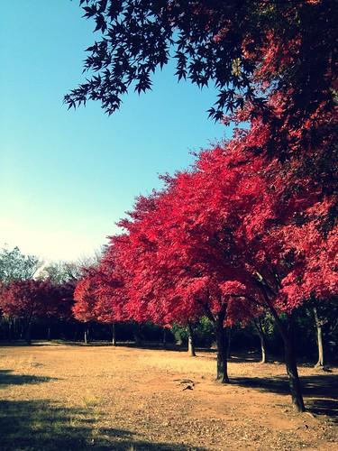 紅葉 舞岡公園3