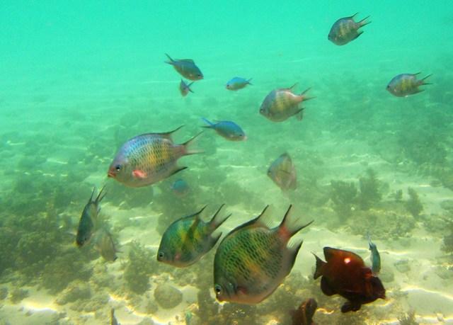 Snorkeling at Halea Nature Park