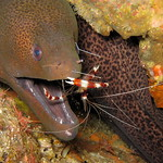 Morey Eel - Racha Island Tour including Scuba Diving