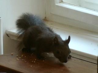 Eichhörnchen 12