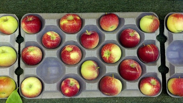 Zestar apples at MN State Fair 2013