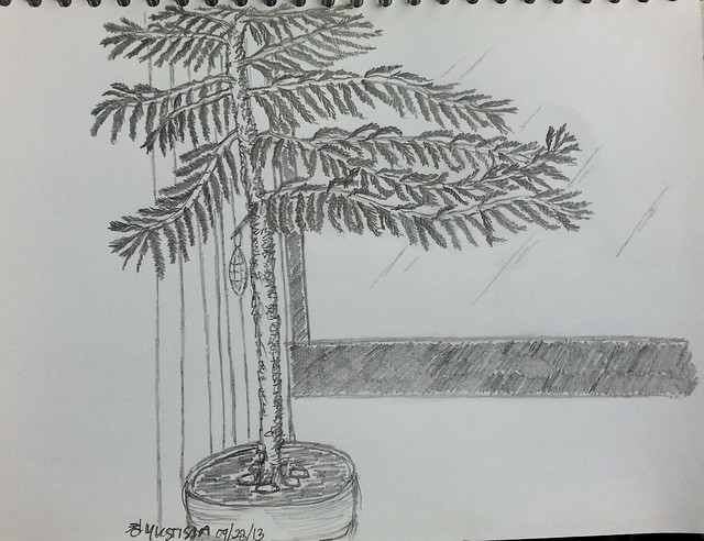 Sketch of Estern Hemlock Tree