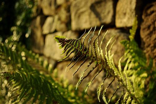 20130807-11_Ferns growing in the walls - Bugsworth Basin near Buxworth by gary.hadden