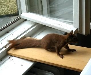 Eichhörnchen zähmen 12