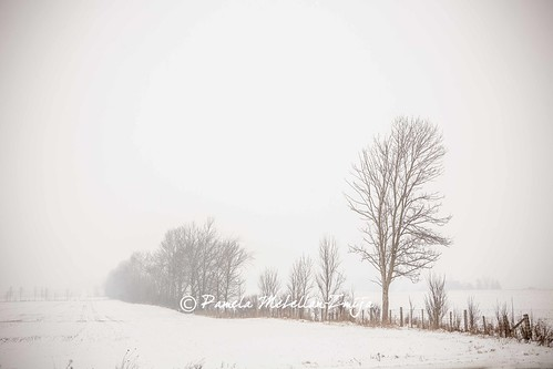 20131201-328C1933-WM by {Pamela Zmija Photography}