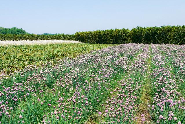 Hokkaido_day6_24
