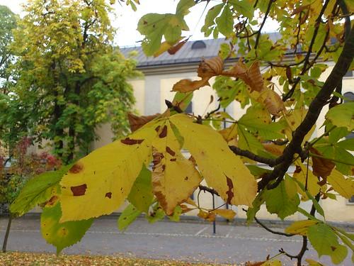 Autumn on Skeppsholmen
