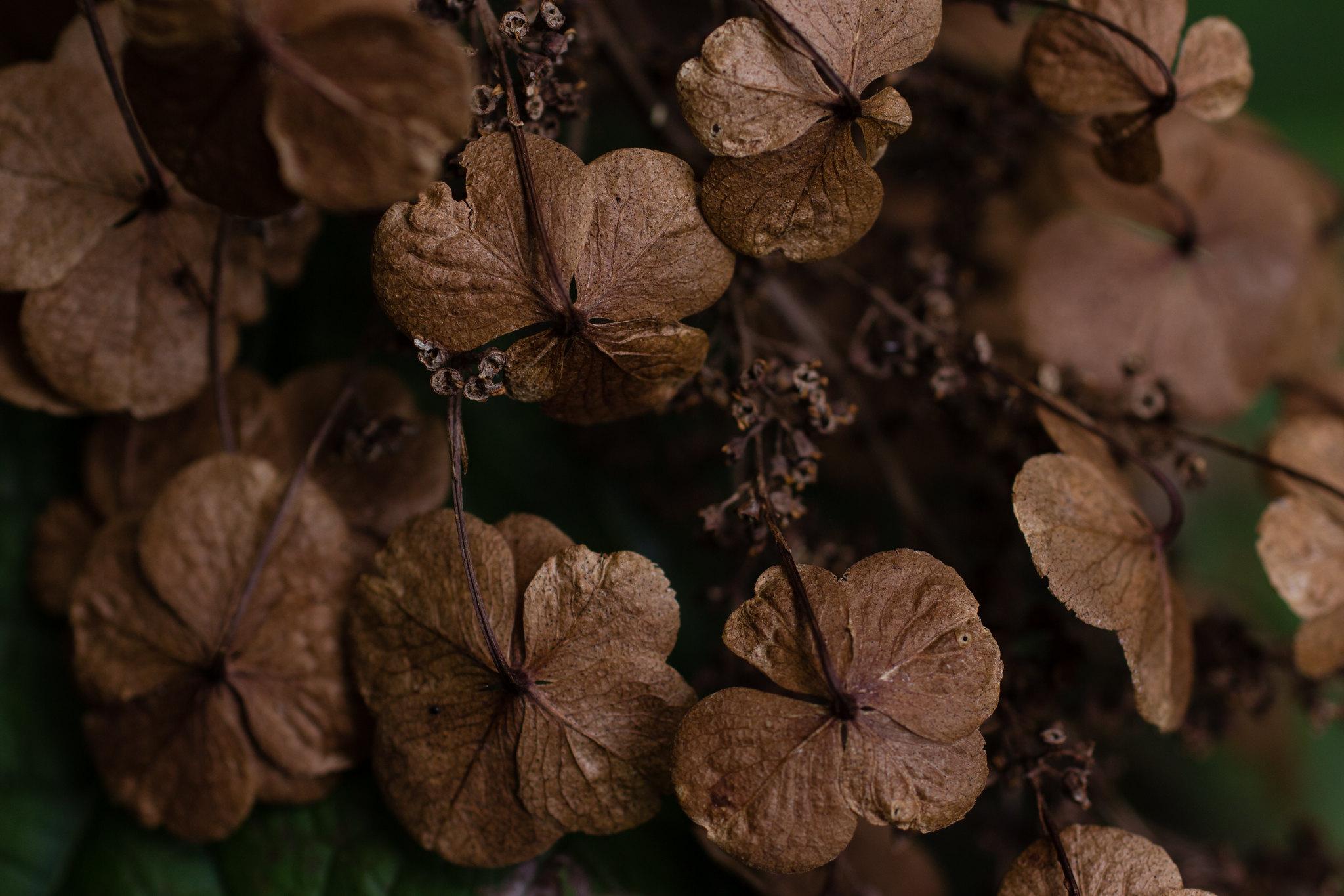 chocolate-hued