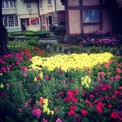 Florida #flowers by @MySoDotCom