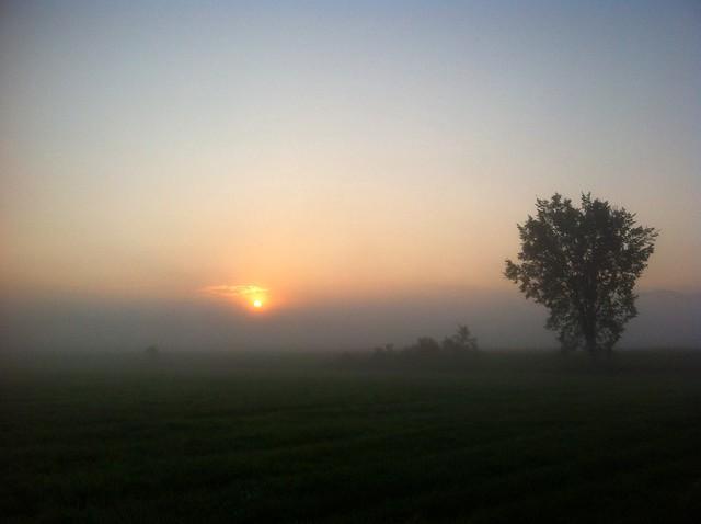 Foggy Ride