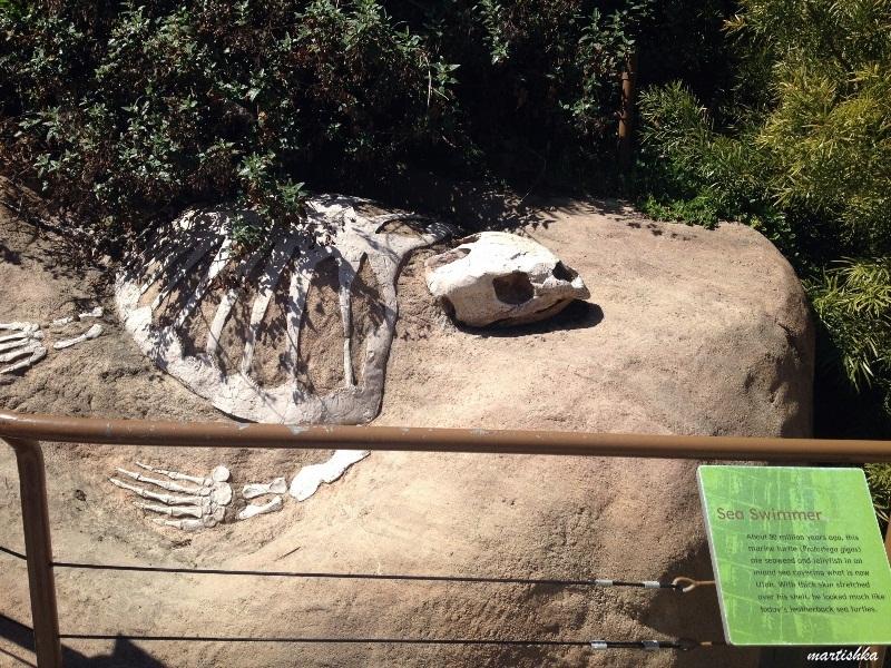 Oakland Zoo (21)