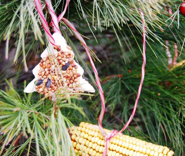 Edible Ornaments For Wildlife And Family Fun