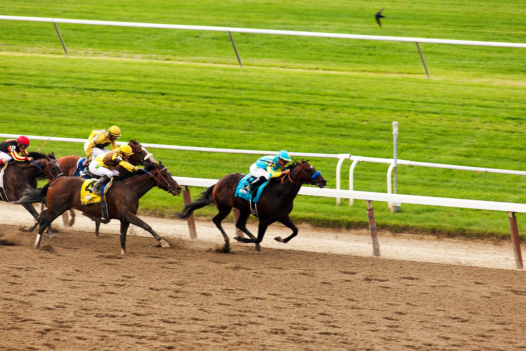 Union Rags on his way to win the Belmont Stakes.
