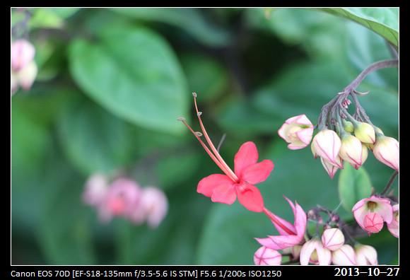 20131027_Flowers