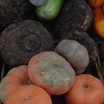 Abu Dhabi di?a 1 Mercado pollos datiles verduras 04