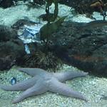 Oceanografic Miguel, acuario 07
