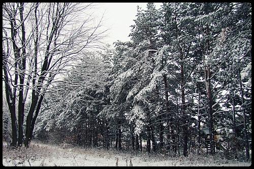hiver2011