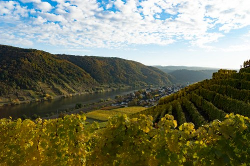 Autum / Herbst in Winningen Mosel