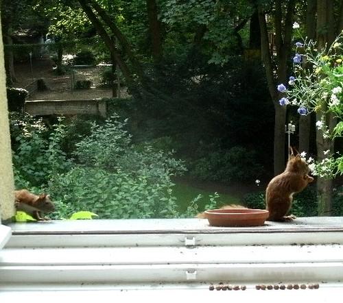 Eichhörnchen 5.1