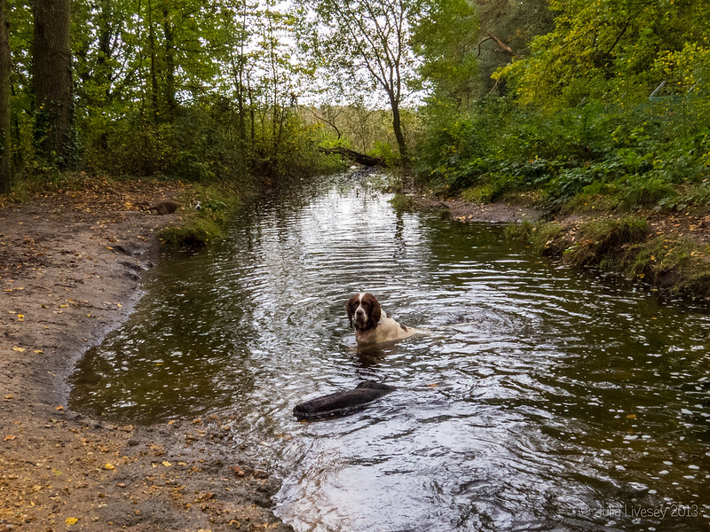 Max in the flooded stream