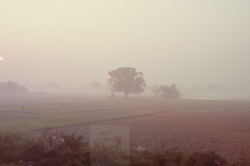 Day 364.365 –  Foggy Morning