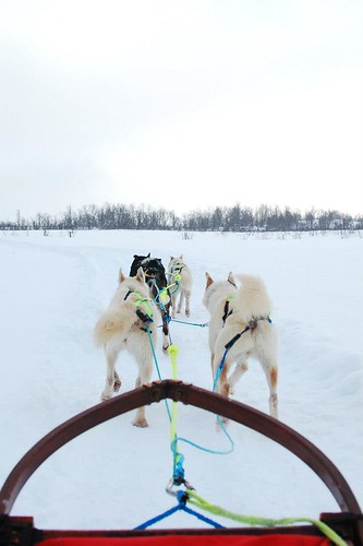 7 days in Norway dogsledding