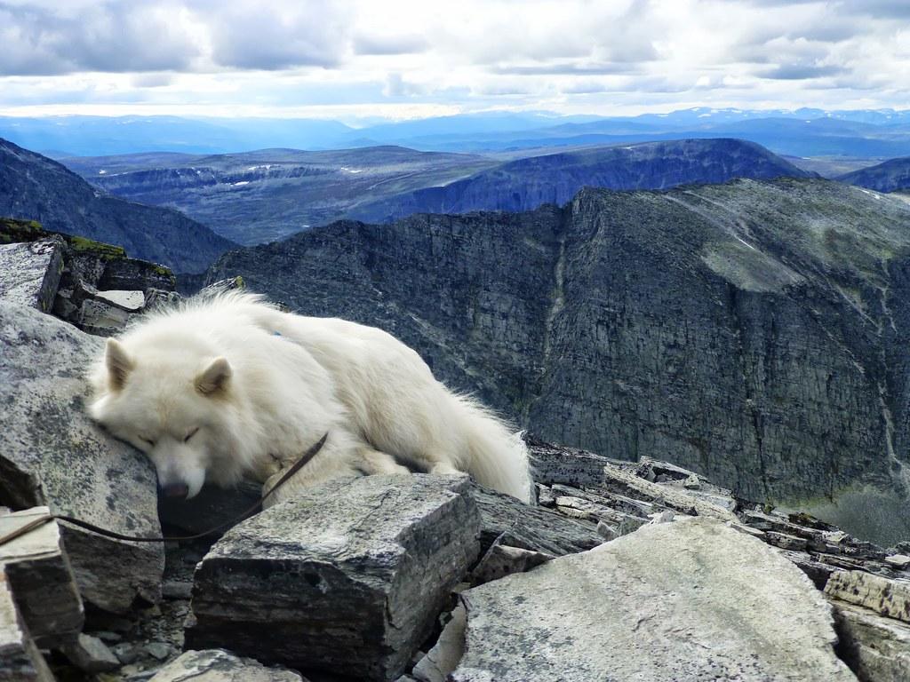Nansen sover på Veslesmeden