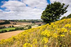 Cerne Valley in #Dorset