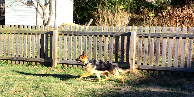 Prancing around the yard