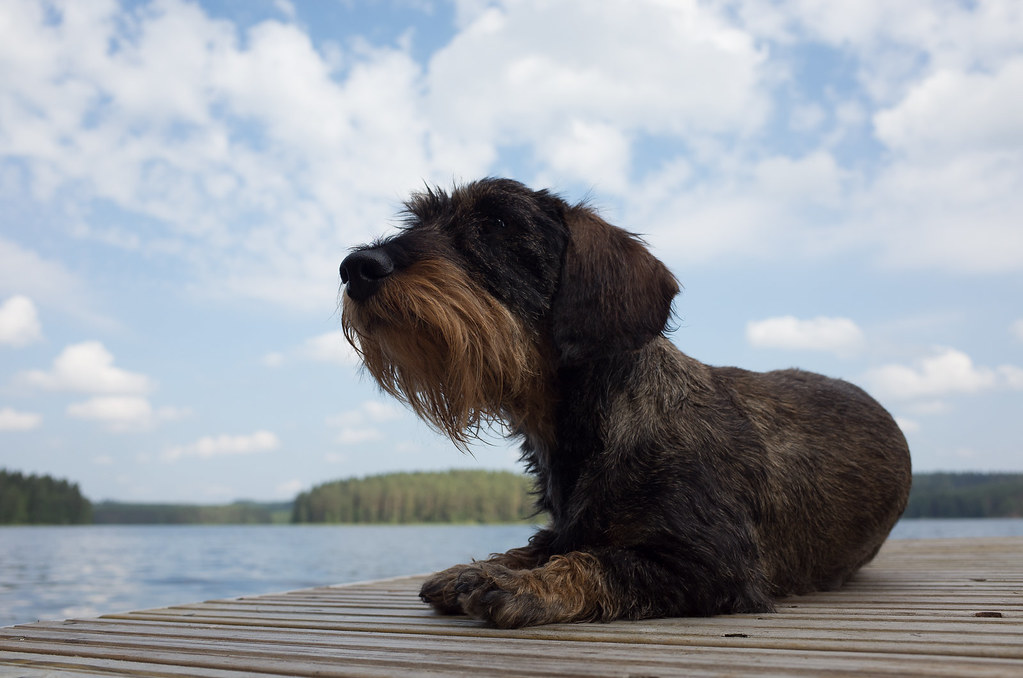 Alpo by the lake