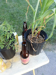 Finished Beer and Plants
