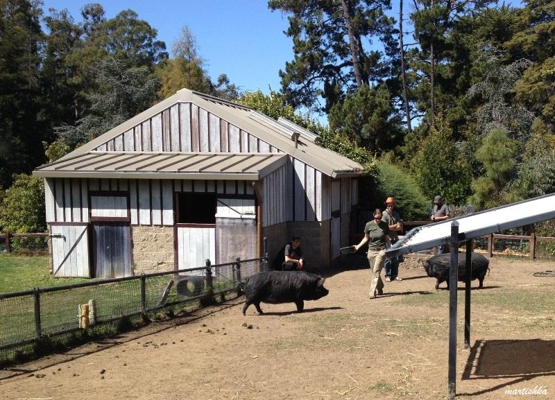 Oakland Zoo (17)